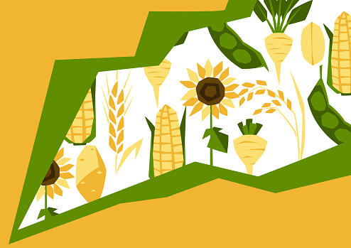 Background with agricultural crops. Harvesting stylized illustration.