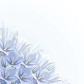 Background with blue bluebell flowers. Vector illustration.