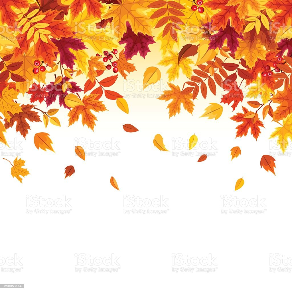 Background with colorful falling autumn leaves. Vector illustration. - illustrazione arte vettoriale