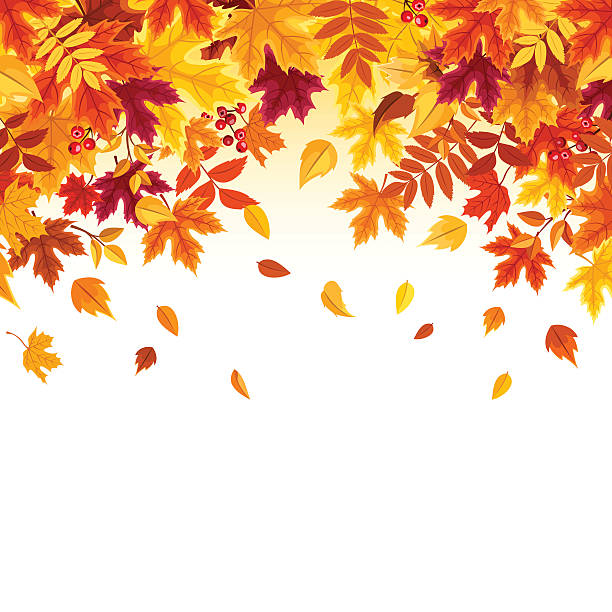 ilustrações, clipart, desenhos animados e ícones de background with colorful falling autumn leaves. vector illustration. - outono