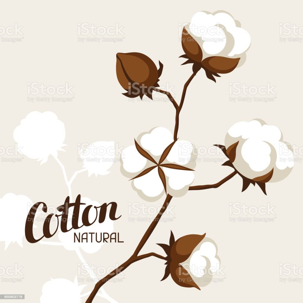 Background with cotton bolls and branches. Stylized illustration vector art illustration