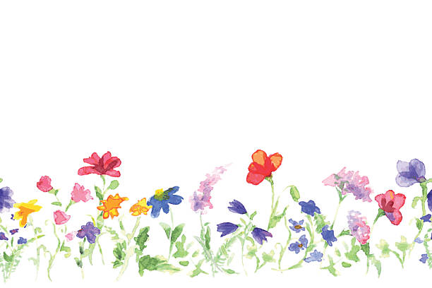 background with drawing of watercolor wildflowers - wildflowers stock illustrations, clip art, cartoons, & icons