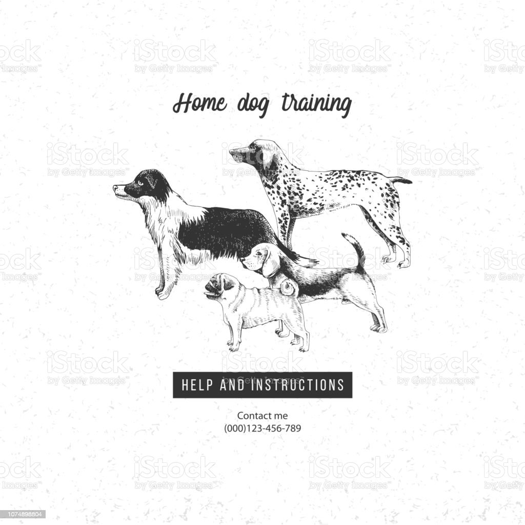 Background With Hand Drawn Dogs For Dog Training Business