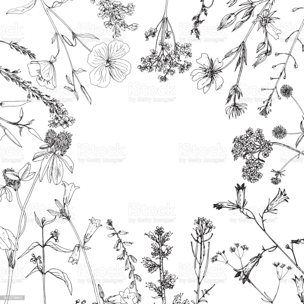 Background with ink drawing herbs and flowers vector art illustration