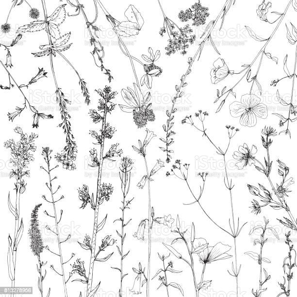 Background with ink drawing herbs and flowers vector id813278956?b=1&k=6&m=813278956&s=612x612&h=1d2jii0hjsyxwnyt2gt1ex4uu358q1ri1 2nun6hvsq=
