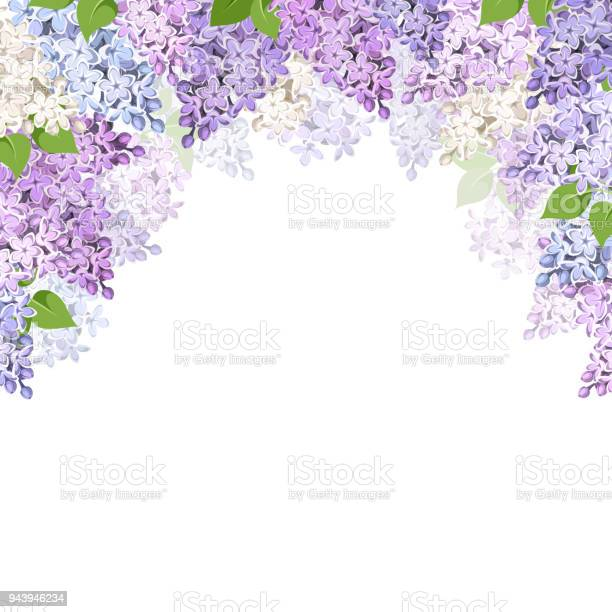 Background with lilac flowers vector illustration vector id943946234?b=1&k=6&m=943946234&s=612x612&h=pzhntoes87zansijuir sniopqi8eci4r hk3vzstss=