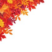 Vector corner background with red and orange autumn leaves.