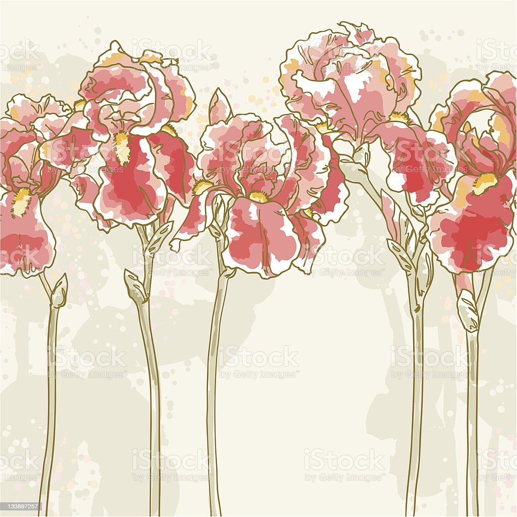 Background With Red Iris Flowers Stock Vector Art More Images Of