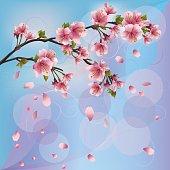 Sakura blossom - Japanese cherry tree background, greeting or invitation card