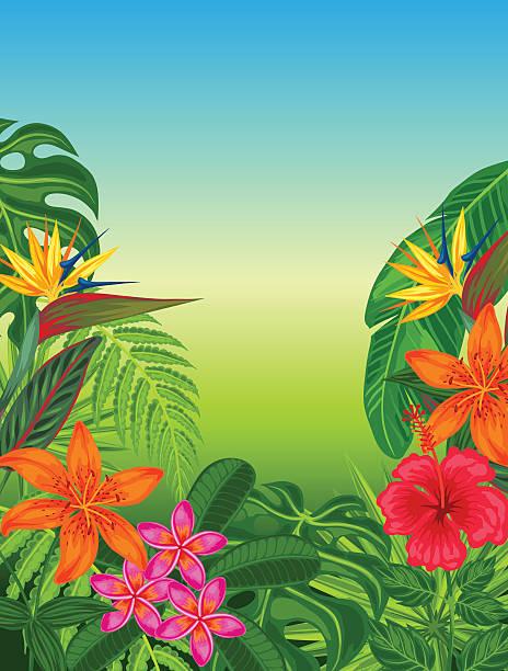hintergrund mit stilisierten tropischen pflanzen, blättern und blumen. bild für - hibiskusgarten stock-grafiken, -clipart, -cartoons und -symbole