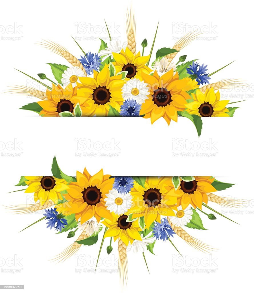 Background with sunflowers, daisies, cornflowers and ears of wheat. Vector.