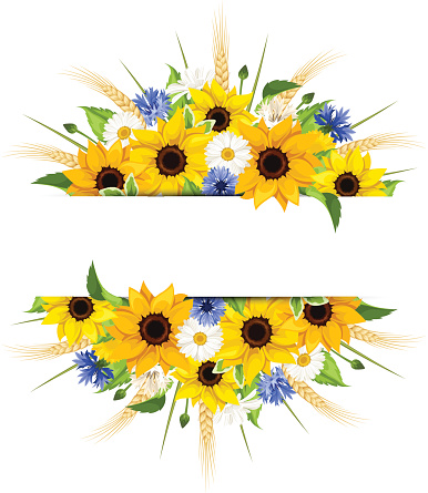 Background With Sunflowers Daisies Cornflowers And Ears Of ...