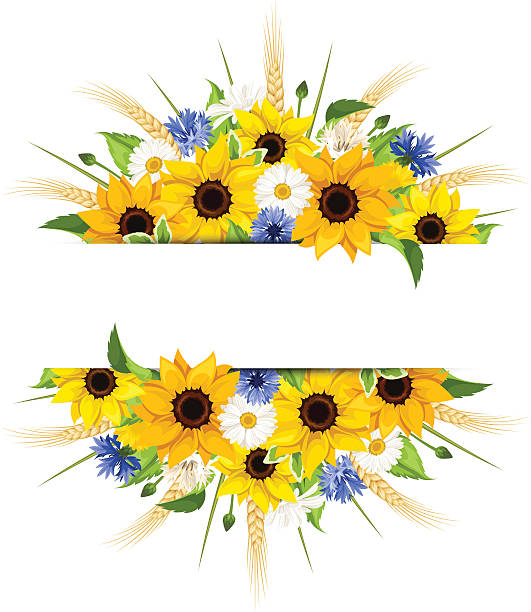 bildbanksillustrationer, clip art samt tecknat material och ikoner med background with sunflowers, daisies, cornflowers and ears of wheat. vector. - flower bouquet blue and white