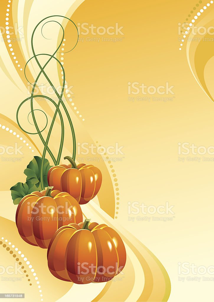 Background with three ripe pumpkins. royalty-free stock vector art