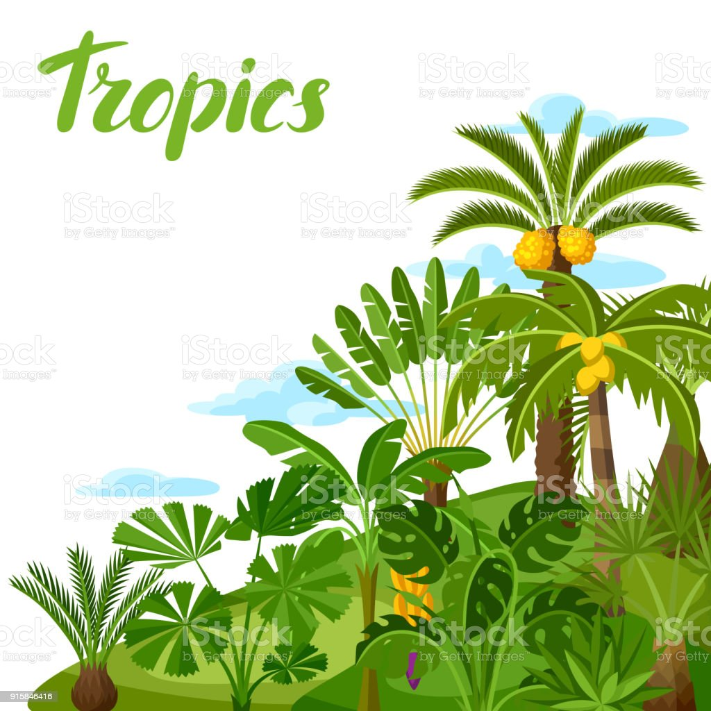background with tropical palm trees exotic tropical plants rh istockphoto com jungle vector pack jungle vectoriel