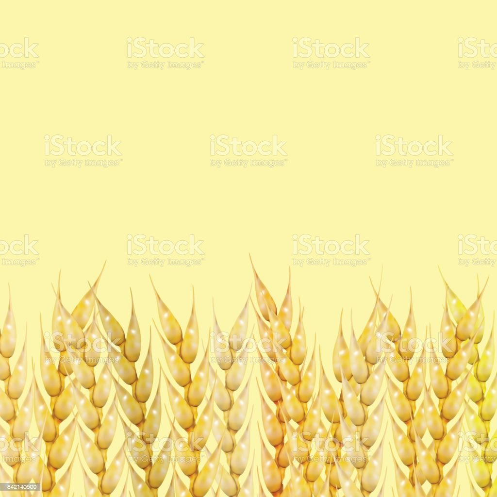 Background with wheat spikelets, vector illustration. vector art illustration
