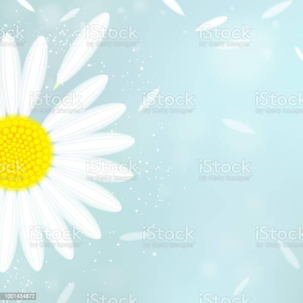 Background with white camomile vector id1001434872?b=1&k=6&m=1001434872&s=612x612&h=udkkagfoeovqfjlem8cadn4qjsgxjspcqjbrcqrqkve=