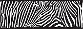 Background with Zebra skin