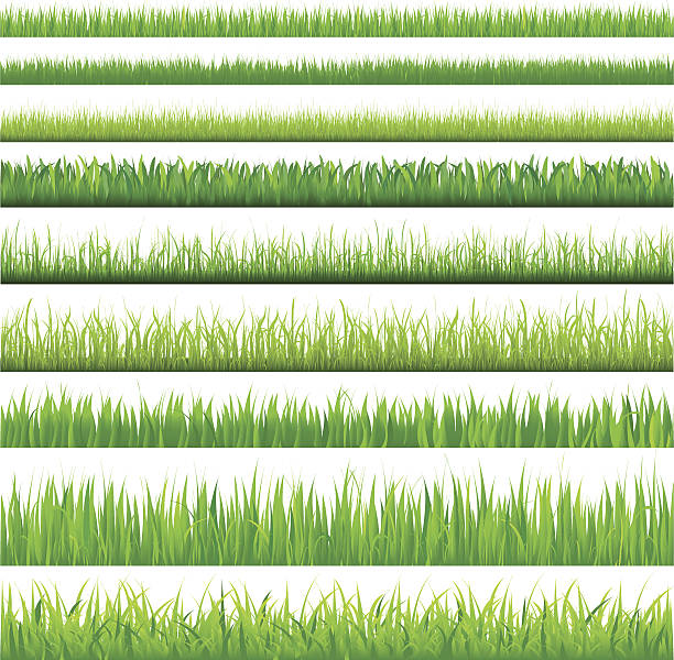 stockillustraties, clipart, cartoons en iconen met backgrounds of green grass - grasspriet