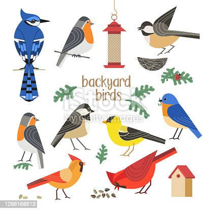 Bird watching icon vector set. Red Northern cardinal, robin chickadee, blue bird, goldfinch comic flat cartoon illustration. Garden backyard birds sign. Minimal simple design. Wildlife banner element