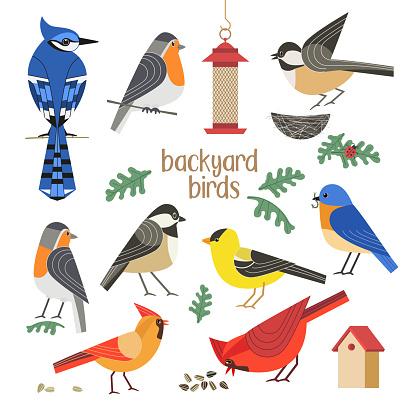 Backyard birds flat color vector icons collection