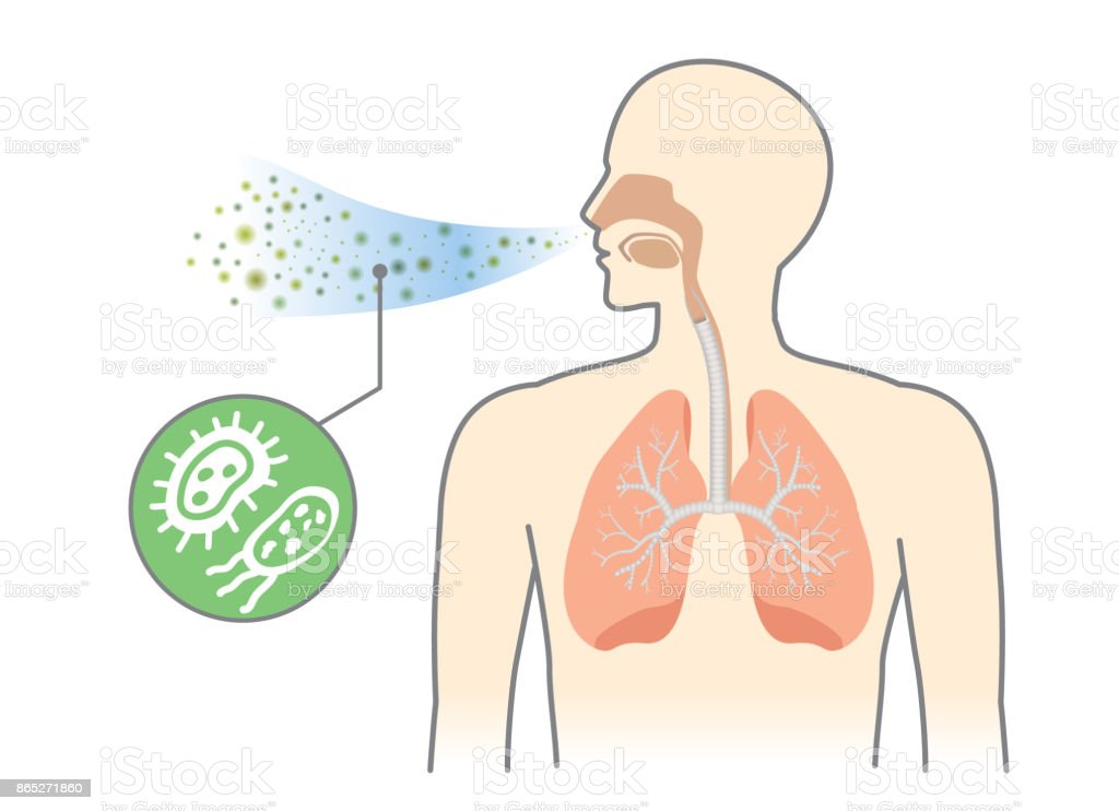 Bacteria and Fungi into respiratory of human from breathe. vector art illustration