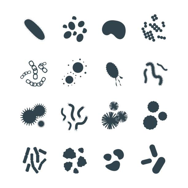 Bacteria virus microscopic isolated microbes icon human microbiology organism and medicine infection biology illness pathogen mold vector illustration Bacteria virus microscopic isolated microbes icon human microbiology organism and medicine infection biology illness pathogen mold vector illustration. Pollen disease hiv bacterium science sign. bacterium stock illustrations