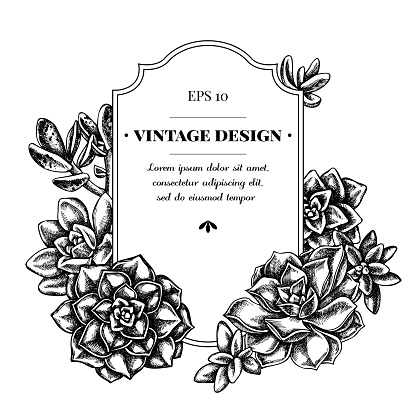 Badge design with black and white succulent echeveria, succulent echeveria, succulent
