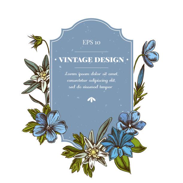 stockillustraties, clipart, cartoons en iconen met badge ontwerp met gekleurde edelweiss, weide geranium, gentiana - gentiaan