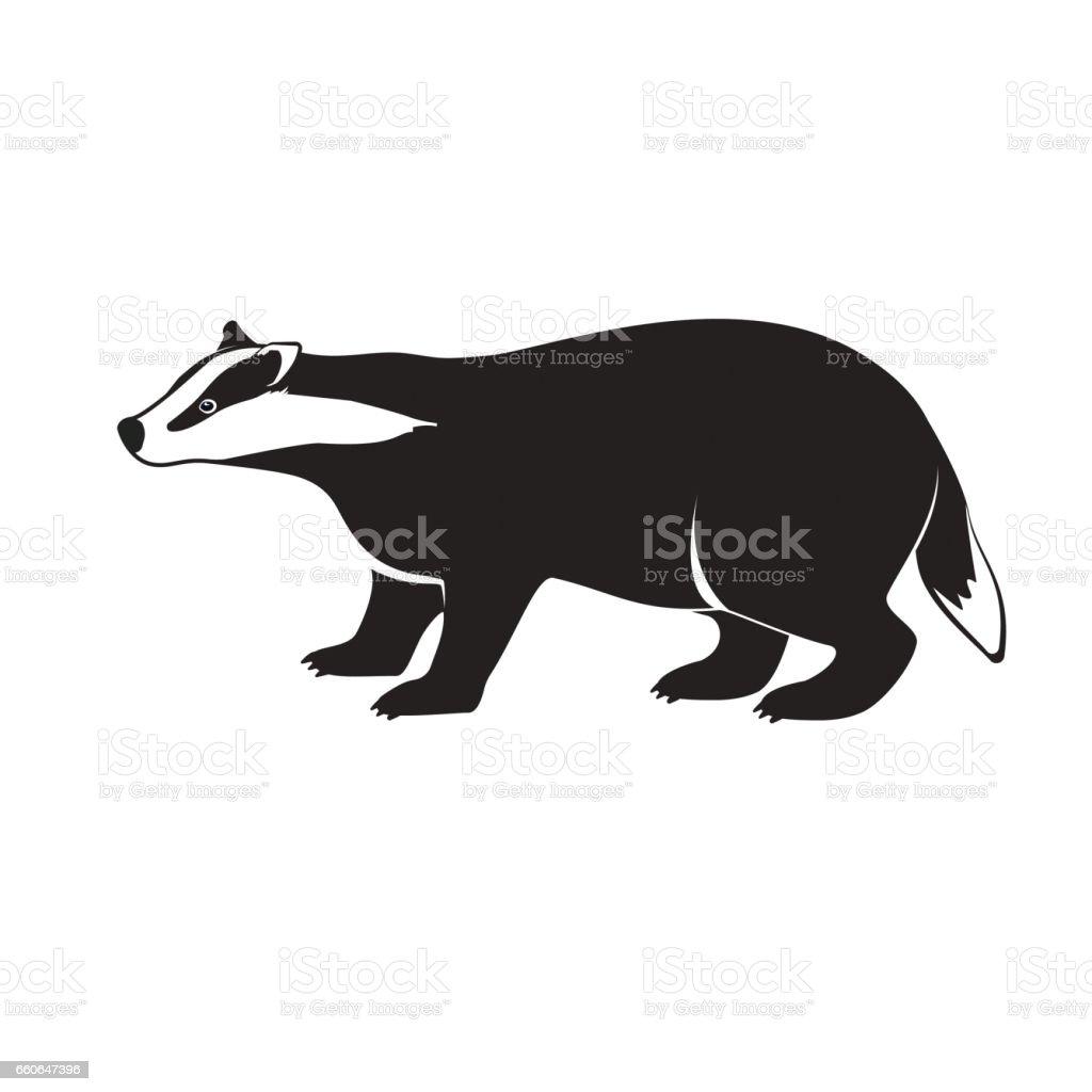 Badger on short legs isolated on white background. vector art illustration