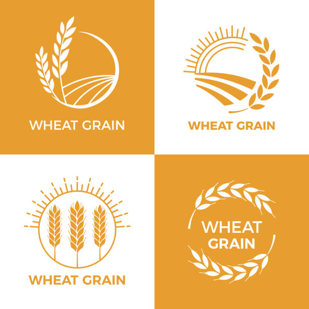 Baked wheat logo. Field wheats grain label, bake elements. Food baking insignia vector illustration set Baked wheat logo. Field wheats grain label, bake elements. Food baking insignia harvest barley logo, grain wheat field bread bakery food awards vintage vector illustration set wheat stock illustrations