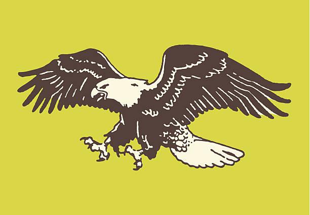 illustrations, cliparts, dessins animés et icônes de bald eagle sur le terrain - aigle