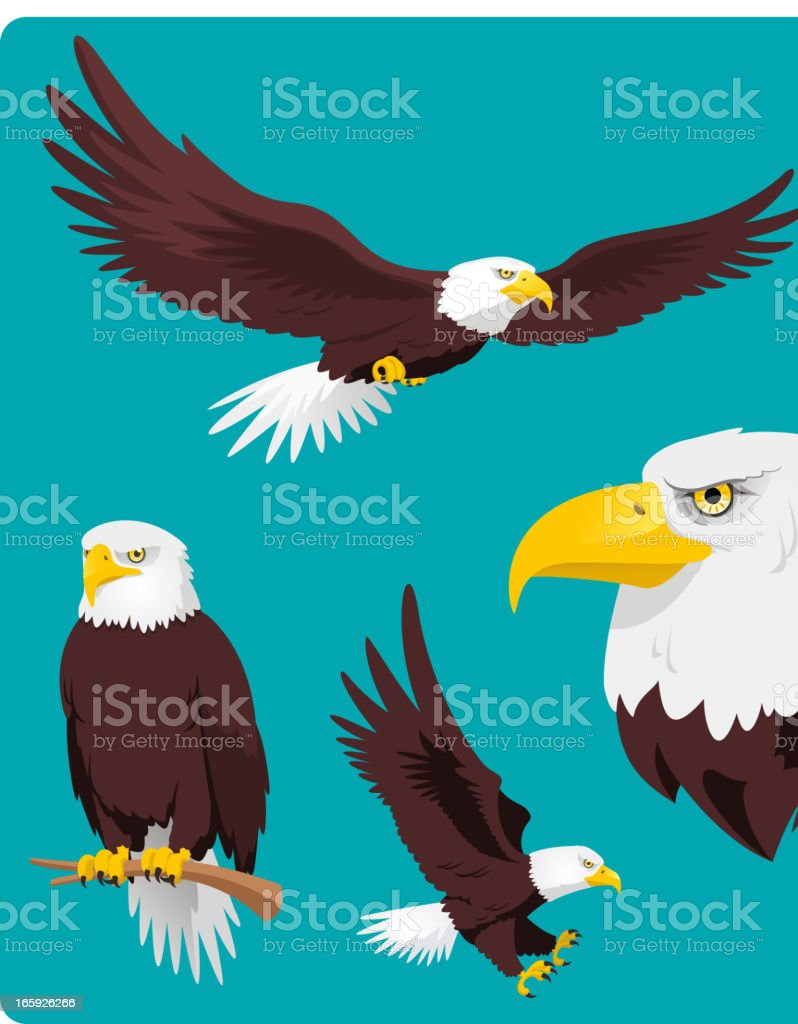 Bald Eagle Flying Perching Landing and Head royalty-free stock vector art