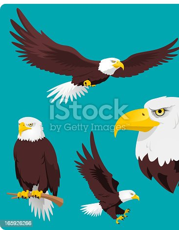 Bald Eagle in four different situations like, Flying Eagle, Perching Eagle, Landing and Eagle Head vector cartoon collection.