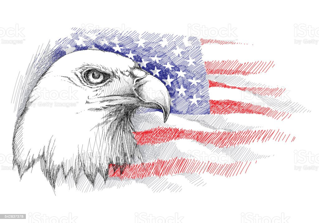 Bald eagle head on the background with American flag isolated. vector art illustration