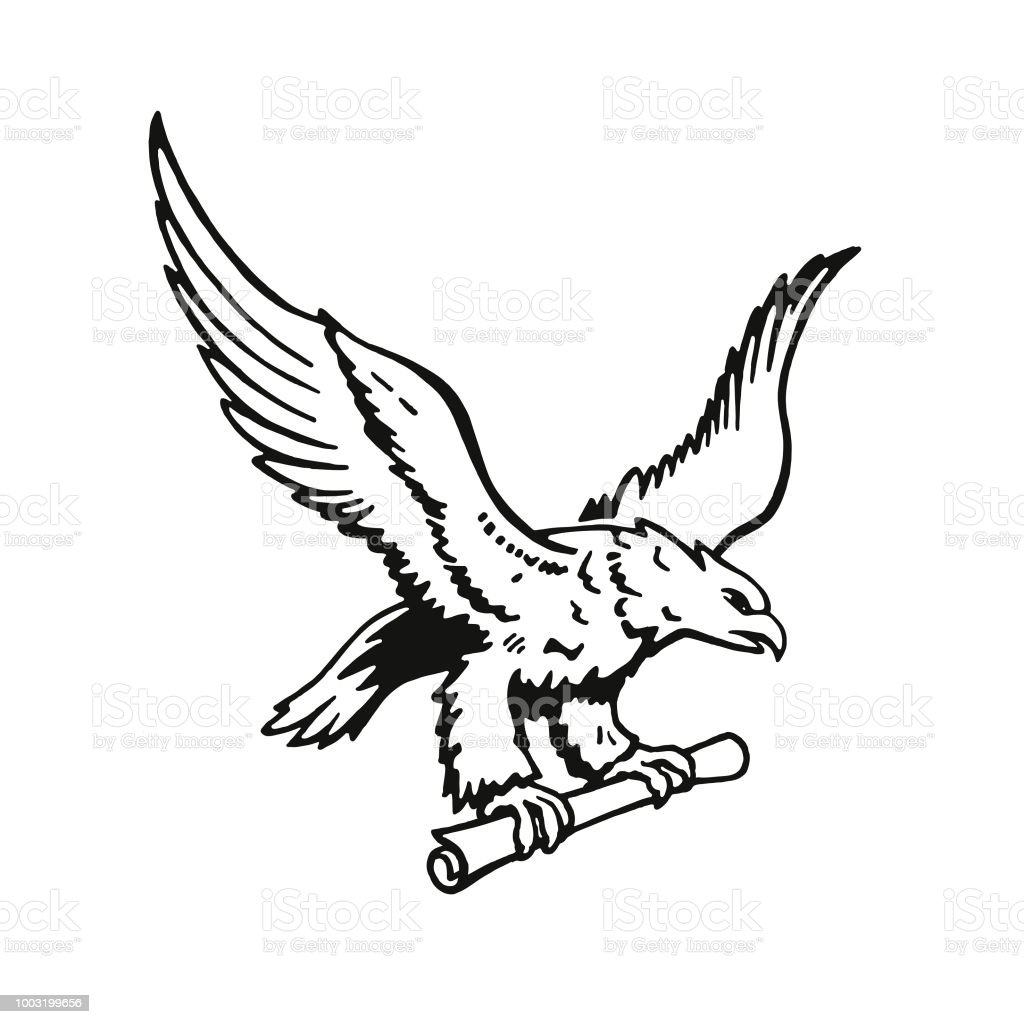 Bald Eagle Holding A Scroll Stock Vector Art & More Images of Animal ...