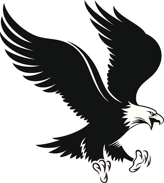 Águila de cabeza blanca - ilustración de arte vectorial