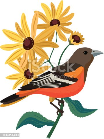 A vector illustration of Baltimore oriole and black eyed Susans.