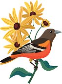 istock Baltimore oriole and black eyed Susans 166054439