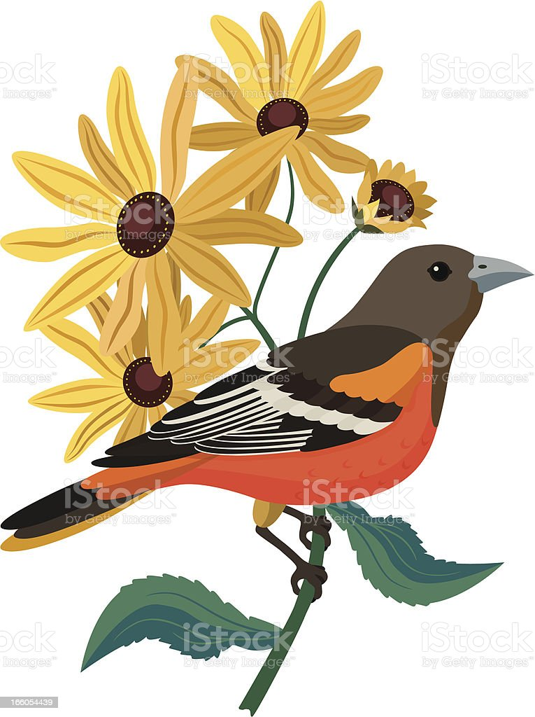 Baltimore oriole and black eyed Susans vector art illustration