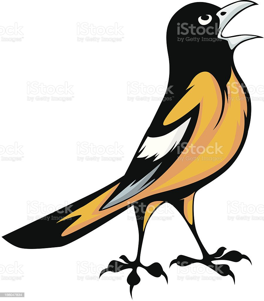 Baltimore Oriole Bird Illustration vector art illustration