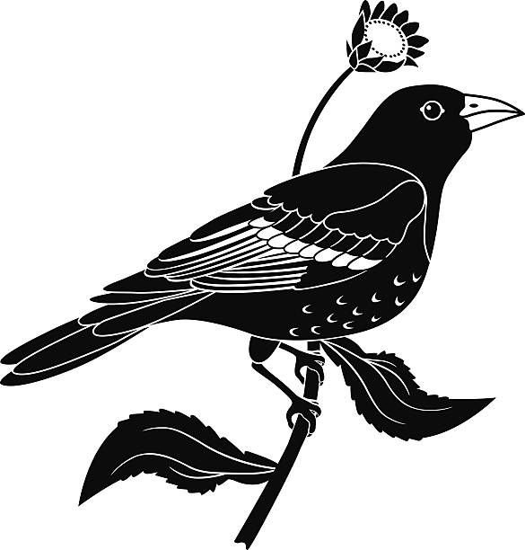 Baltimore Oriole perched on sunflower plant in black and white vector art illustration
