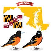 istock Baltimore Oriole 1014933782