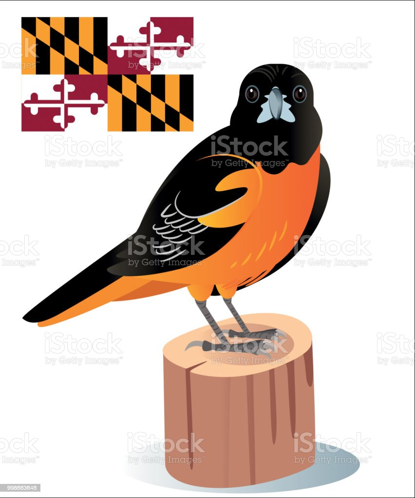 Baltimore Oriole vector art illustration