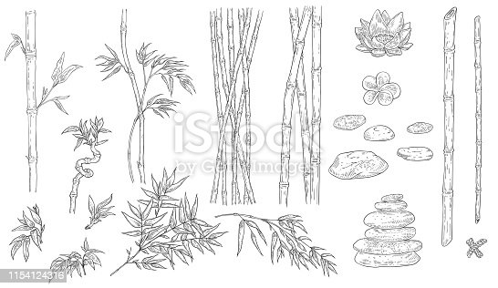 Bamboo and spa vector illustration set in sketch outline style - various traditional asian natural elements of stems with leaves, stones and flowers isolated on white background.