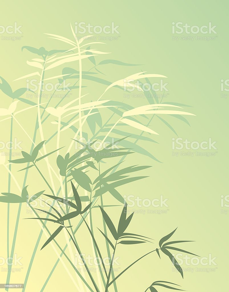 Bamboo Background - Plant vector art illustration