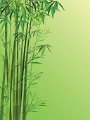 Vector Illustration : Bamboo background