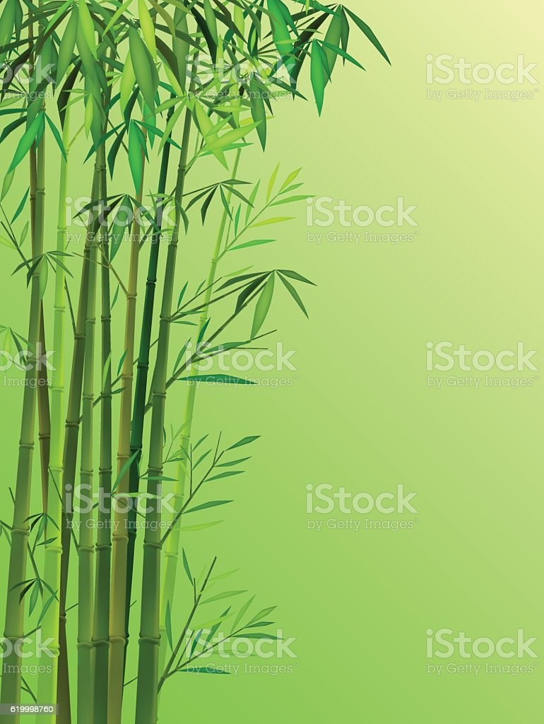 Bamboo background vector art illustration