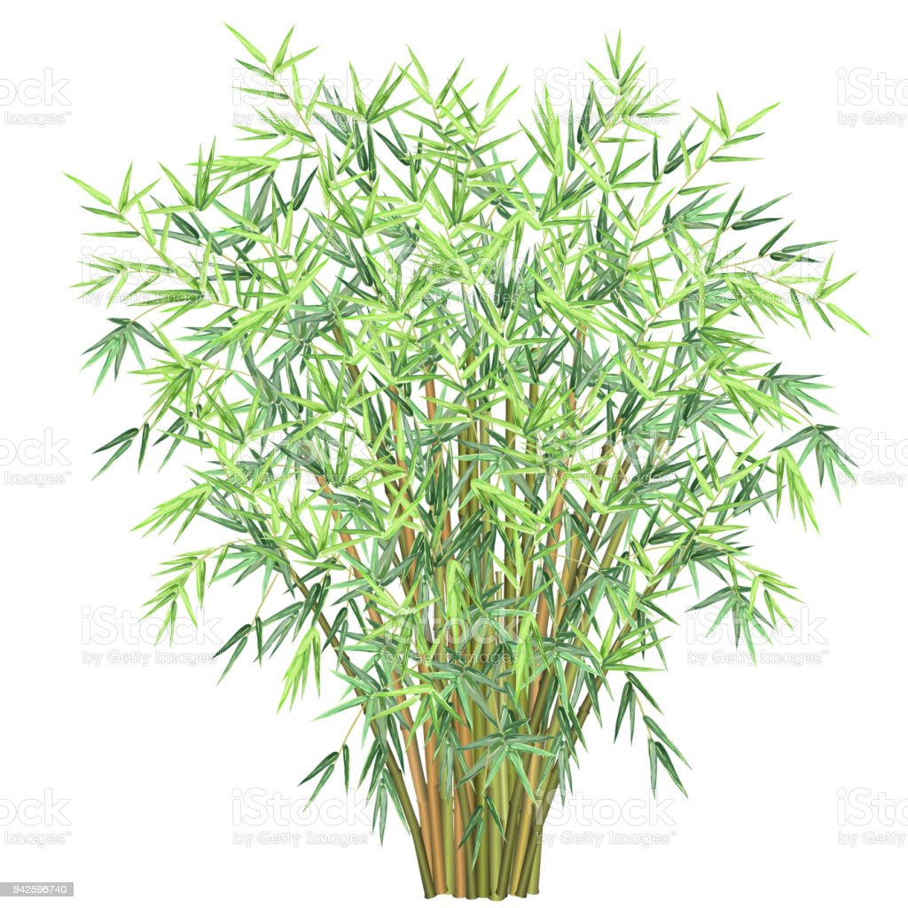 Bamboo branches, vector illustration. vector art illustration