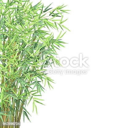 Bamboo with copy space. Realistic vector illustration on white background for card, banner and poster design.